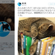 画像は桶川猫のTwitterスクリーンショット