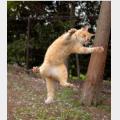 ニャンコはいつまでも元気で。図は人・犬・猫の「善玉菌」(東京