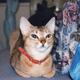 我が家にやってきたころのディーナさん。目元のきりっとした、スリムで小柄な美人さんでした