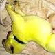 白色のジャーマンシェパードから緑色の子犬が生まれた/Shana Stamey/WLOS