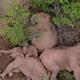 自然保護区から逃げ出したゾウの群れが集団で眠っている様子が空撮された/CCTV VIA REUTERS