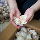 江蘇省南通市産の種子用ニンニク、7年連続で日本へ輸出