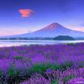 画像3_富士山とラベンダー