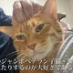 """""""バンザイポーズ""""でふみふみする猫…両手で顔を包み込まれて熟睡する猫ちゃんに、見ているこちらも癒される…!"""