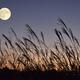 10月1日から3日は金運に関する吉日が続くラッキーな3日間!月のパワーを使って運気をアップ♡
