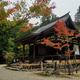 【後編】京都の奥座敷「高雄」を大混雑の紅葉シーズンでも快適に訪問できる裏技