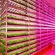 世界最大級の「植物工場」、宮城に新設