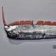 リュウグウノツカイよりも珍しい 謎の深海魚を富山県沖で捕獲
