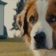 東京近郊では、こんな大型犬飼いたくてもなかなか飼えませんね…/[c]2019 Storyteller Distribution Co., LLC, Walden Media, LLC and Alibaba Pictures Media, LLC.