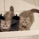 玄関で出掛けようとする飼い主さんを見つめるムギちゃん(左)とマリーちゃん(提供写真)