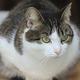 猫(2020年4月19日撮影、資料写真)。(c)PETRAS MALUKAS / AFP