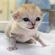 日本国内で初 栃木県の動物園でスナネコの赤ちゃんが誕生