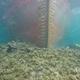 仏領コルシカ島ボニファシオ近くの海岸に座礁した貨物船「ロダニュス」を捉えた水中写真。同国海軍提供(2019年10月14日公開)。(c)AFP=時事/AFPBB News