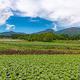 日本のブランド品種が中韓に流出 種苗法改正にトンデモ反対論も