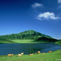 画像5_阿蘇山の草千里