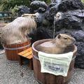 頭当たってるけど...(画像は埼玉県こども動物自然公園公式ツイ
