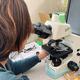 顕微鏡で花粉を一つ一つ数える