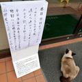 貼り紙とネコを撮影した飲食店「高崎Ring Road」(@ringroad1)