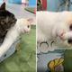 提供:保護猫カフェきゃりこ武蔵野店・ふじみ野店(@calicomusashino)さん