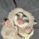 画像提供:フクロモモンガの 露(つゆ) はだいたい眠い(@tsuyukusa_430)さん