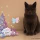 """今年はお家でイルミネーション!キキ&ララがふわふわ浮かぶ""""ARクリスマスツリー""""無料配信中☆"""