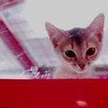 """ペット系図netが『2014年 ペットの名前トレンド』発表!2位は"""""""