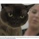 洗濯機に14分間も閉じ込められてしまった猫(画像は『7NEWS.com.au 2020年7月2日付「Queensland cat survives being trapped in washing machine during hot cycle」(Credit: Beachside Veterinary Surgery/Facebook)』のスクリーンショット)
