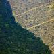ブラジル北西部ロンドニア州の森林伐採地。航空機から撮影(2019年8月23日撮影)。(c)CARL DE SOUZA / AFP