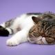 「ふて寝」は健康の秘訣!? 悩んだときは眠るが勝ち