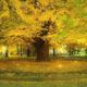 東京・紅葉狩りスポットの穴場5選。目白庭園、清水谷公園も【2019年】