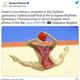 首から上が写っていない体操選手の写真が話題に「首切られたのかと」