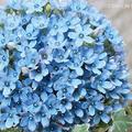 花言葉も一緒に贈れば、さらに感動は高まるはず!