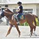 好調な手塚厩舎の期待馬ネージュフォレスト(撮影・園田高夫)