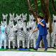 タイ・バンコクで、診療所の外に並べられたシマウマの人形の前を掃く従業員(2021年2月16日撮影)。(c)Mladen ANTONOV / AFP