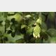 葉の「枯れ具合」まで完全擬態する昆虫のスペックがスゴイ