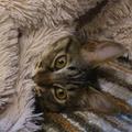 日本の定番じゃないの? 「タマ」という名前の猫、いまでは珍し