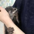 抱っこされながら目をつぶるコツメカワウソ