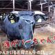 宇陀の畜産を紹介する動画=奈良県宇陀市提供