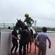 阪神5Rの新馬戦を快勝したフェブカズマ(牡2=安田隆、父ドレフォン)