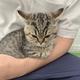 絶対に許さなニャい……飼い主の腕の中で静かに怒る子猫がかわいい