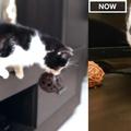 猫の3か月と3歳を比較06