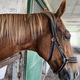 有名馬のたてがみが切られる 器物破損容疑で捜査
