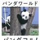 『パンダワールド We love PANDA』中川 美帆 大和書房