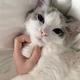 EOW・Laco、愛猫の前で号泣したら「思いきり威嚇のポーズ(笑)」