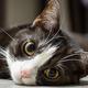 猫の顔を見て感情を当てられるか実験 大半の人は苦手だと判明