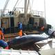 クジラの話はなぜ、これほどまでにこじれるのか