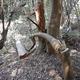 切り倒された樹木=山口県提供