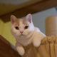 第8回 ねこまつり at 湯島〜猫でつなぐ湯島のまち〜 ※画像はイメージです