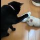 提供:黒猫のミナ(@Krnk_Mn)さん