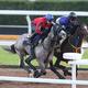 池添謙一騎手を背にCウッドで併せ馬で追い切るメイショウテンゲン(左)